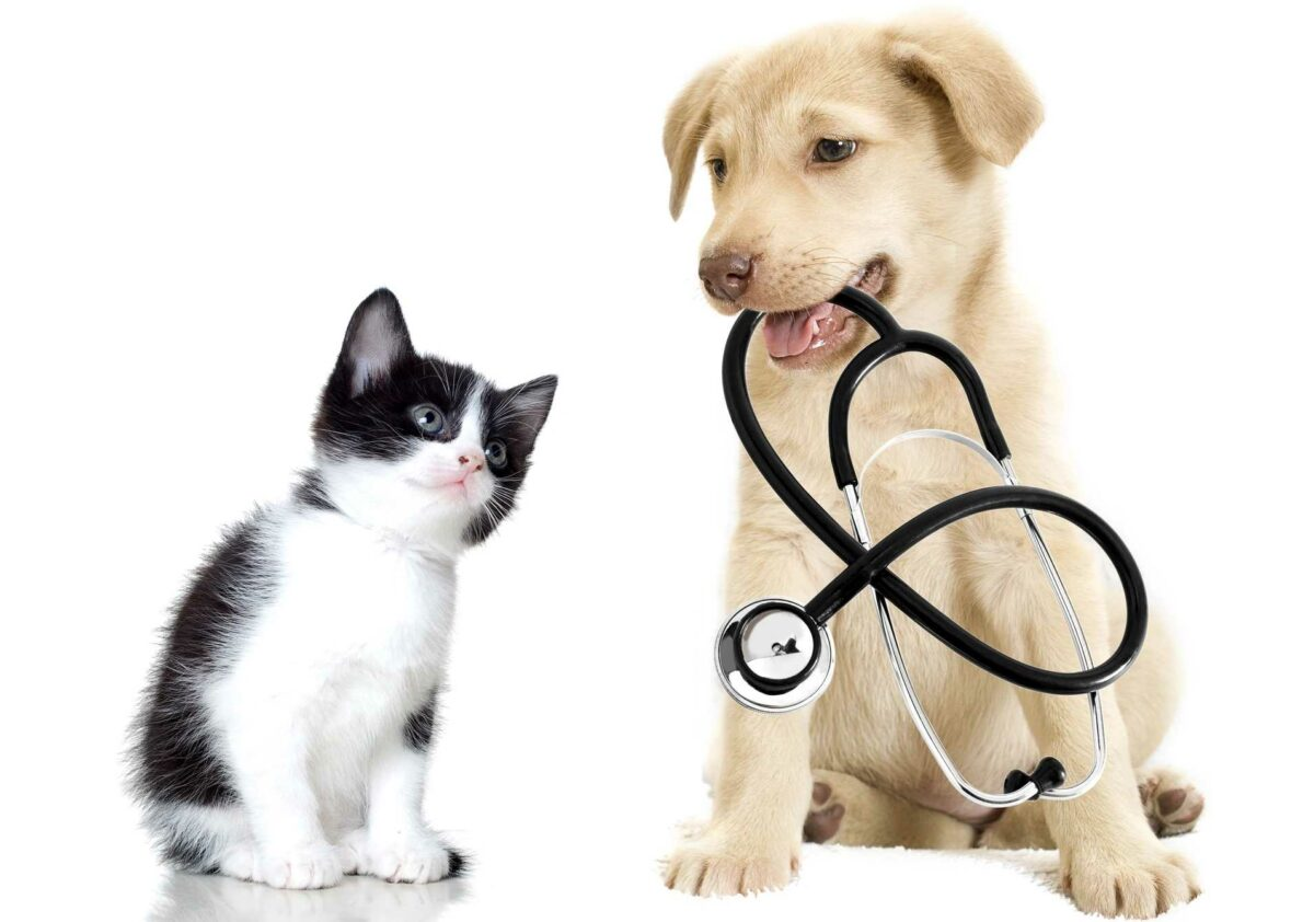 Grant Animal Clinic